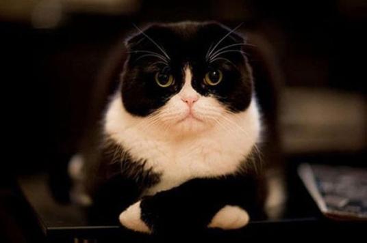 Este gato acha que você não é tão esperto quando acha que é.