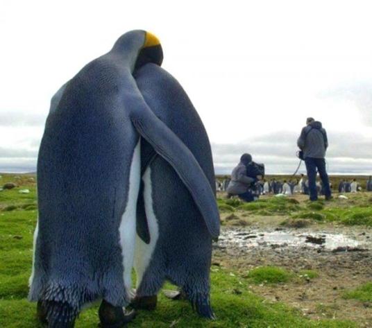 Estes penguins nem quer falar com você agora, OK?