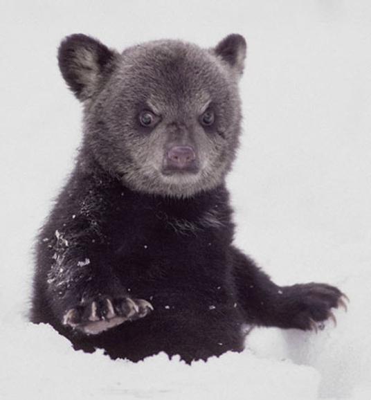 Este ursinhoEsse ursinho está chocado pelo fato de você ter perdido o prazo. Chocado.