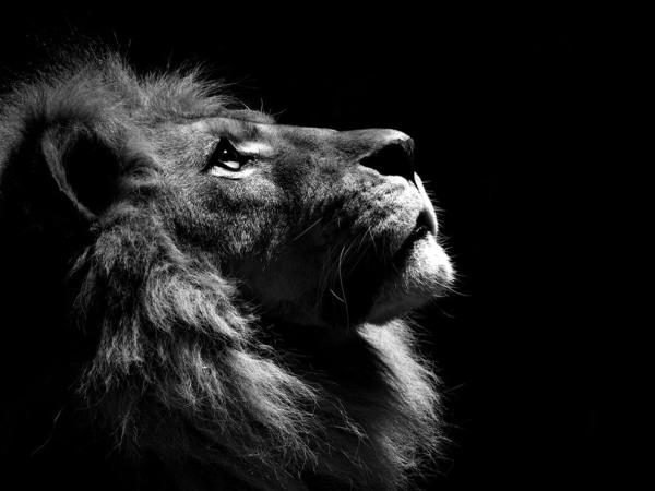 lion_profile