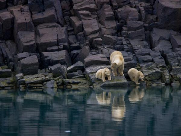 polar-bears-svalbard-pod