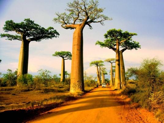 Avenida dos Baobás, Morondava, Madagascar.