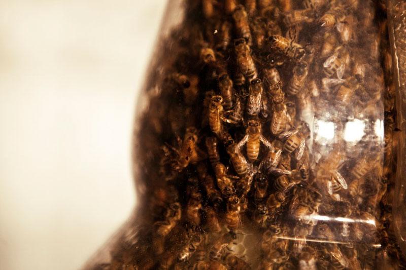 3-bee-printing-dewars-sid-lee-ebeling-group-honeycomb-sculptures-3