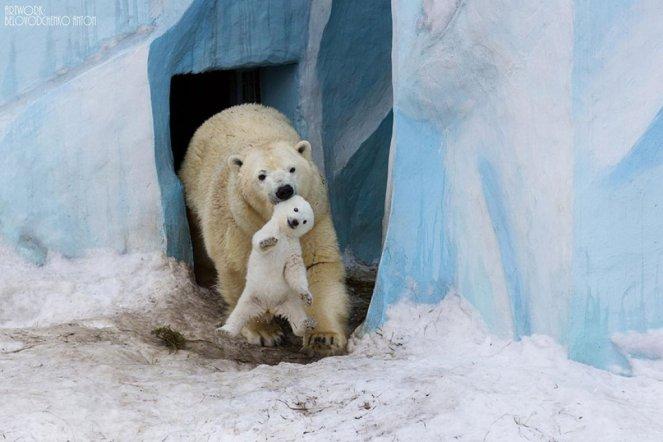 animal-parents-3-1