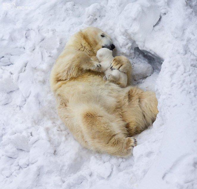 animal-parents-3-2