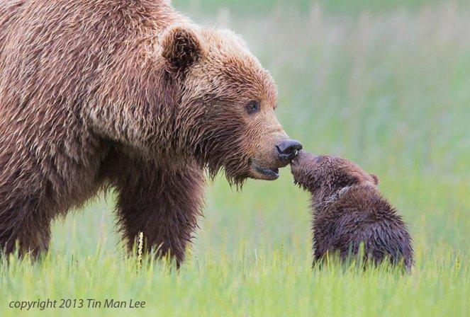animal-parents-40