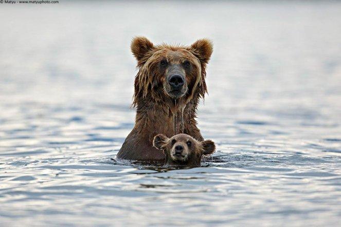 animal-parents-9
