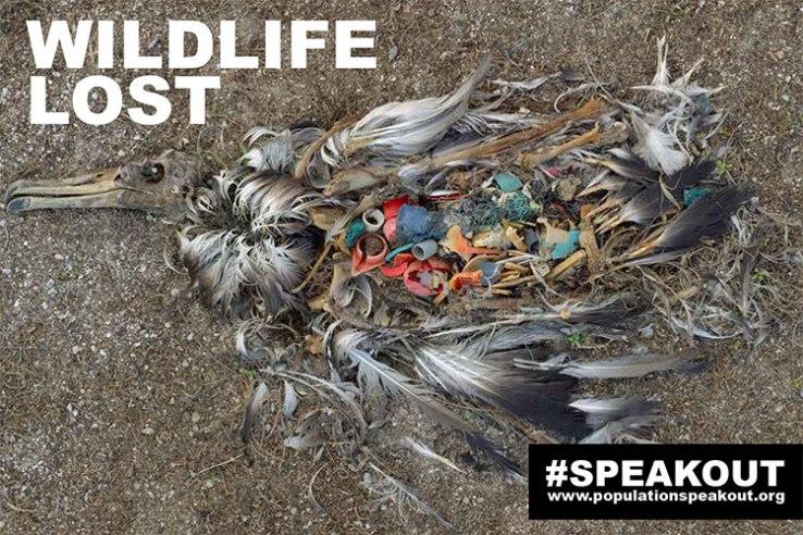 Em Midway Island, longe dos centros do comércio mundial, um albatroz, morto de ingerir muito plástico, decai na praia; é uma visão comum sobre a ilha remota.