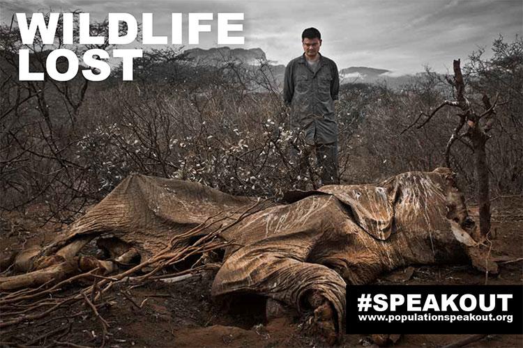 Cara-a-cara com os restos de um elefante caçado no norte do Quênia.