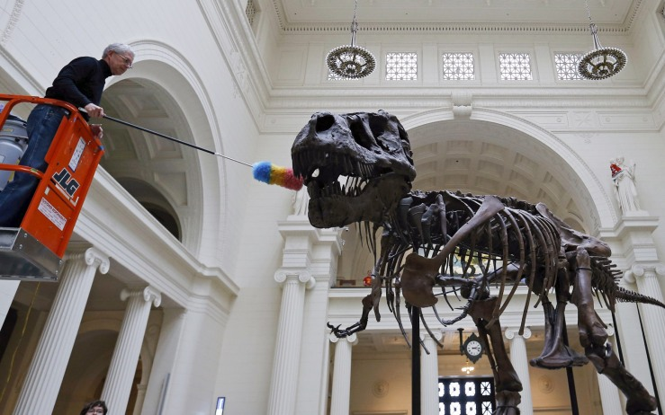 "Geologist Bill Simpson uses a feather duster to clean the 67-million-year-old Tyrannosaurus Rex fossil known as ""SUE"" at The Field Museum in Chicago"