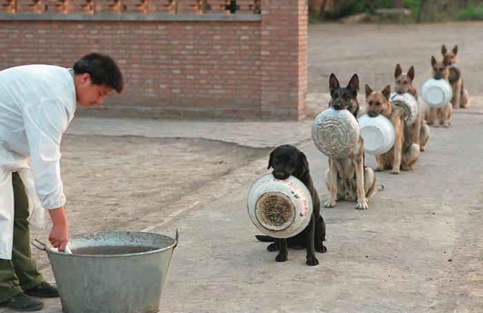 caes-policiais-china-disciplinaod