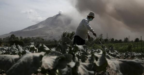 28jun2015---agricultor-retira-cinzas-expelidas-pelo-monte-sinabung-ao-fundo-de-sua-plantacao-de-repolho-na-provincia-de-sumatra-na-indonesia-mais-de-10000-pessoas-de-12-aldeias-que-vivem-em-torno-1435490484510