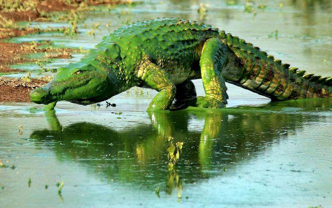 crocodilo-hulk