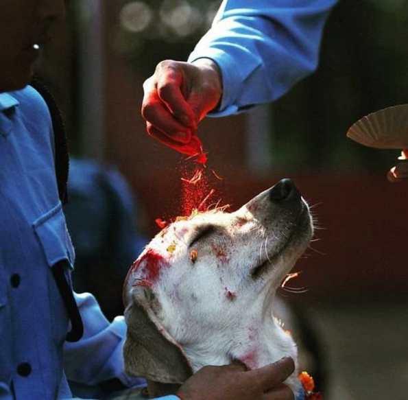 festival-perros-nepal-6
