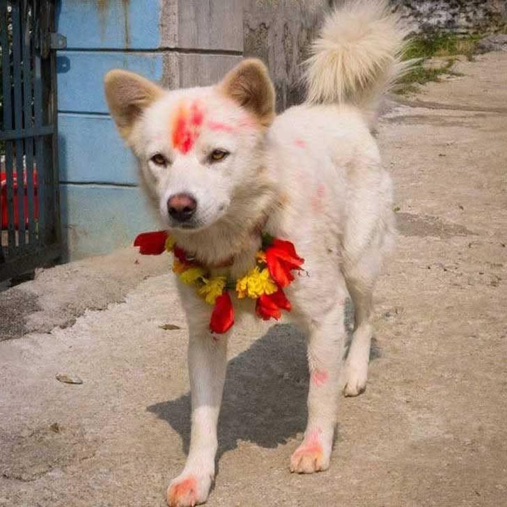 festival-perros-nepal-7