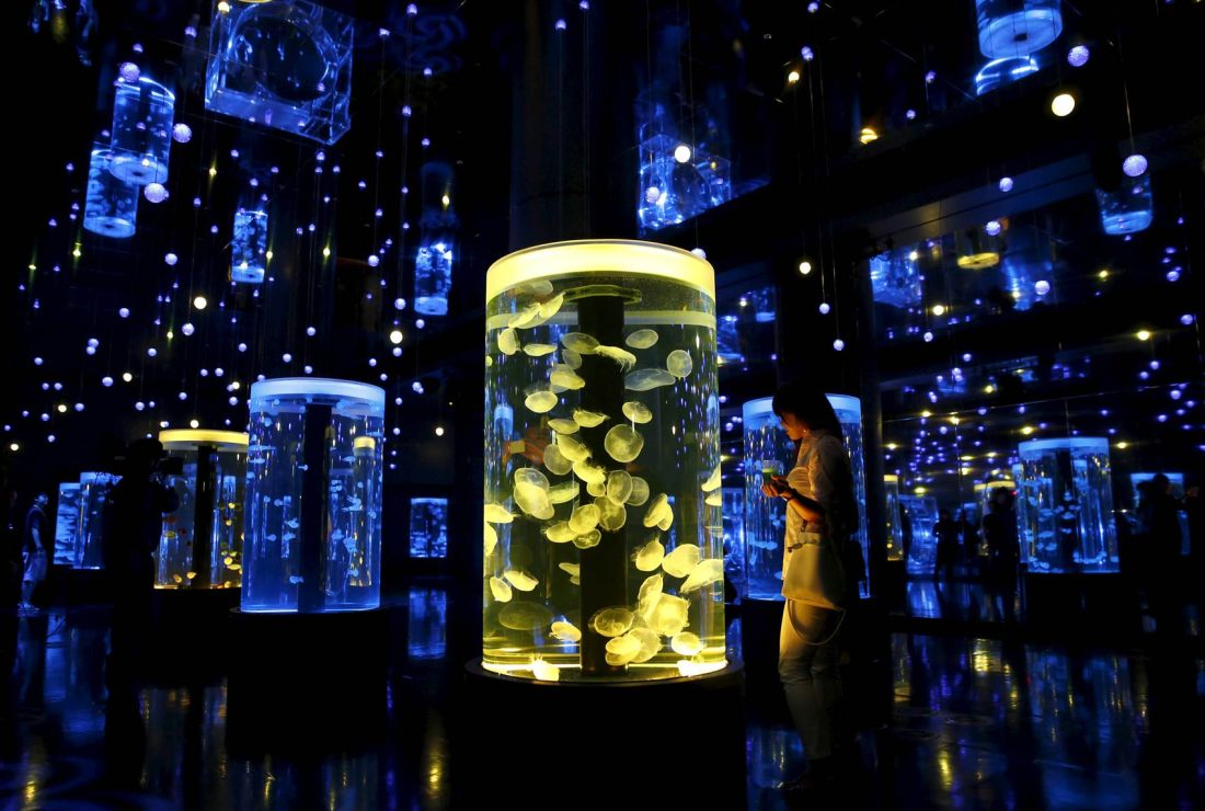 japao-aquario