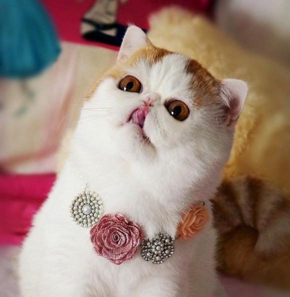 Most-Famous-Felines-011
