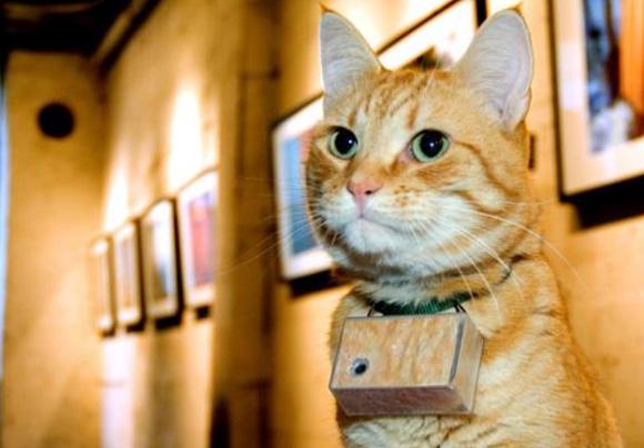 Most-Famous-Felines-021