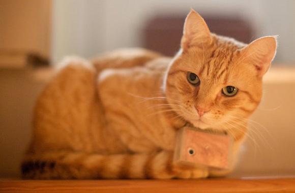 Most-Famous-Felines-022