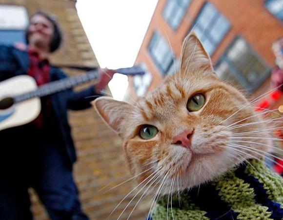 Most-Famous-Felines-033