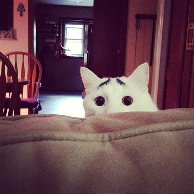 Os-Gatos-Mais-Famosos-da-Internet-Blog-Animal-12