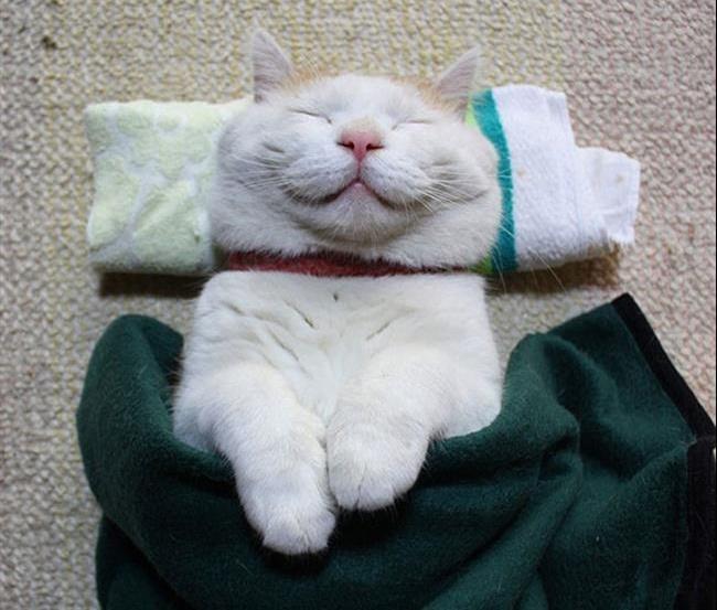 Os-Gatos-Mais-Famosos-da-Internet-Blog-Animal-2
