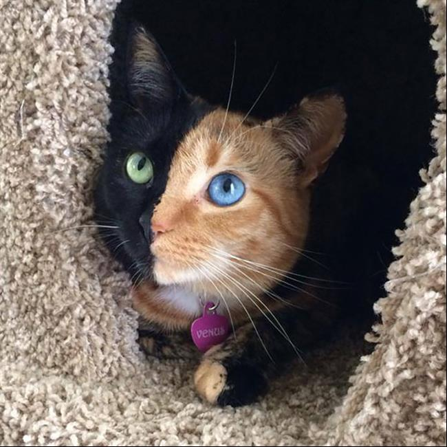 Os-Gatos-Mais-Famosos-da-Internet-Blog-Animal-21