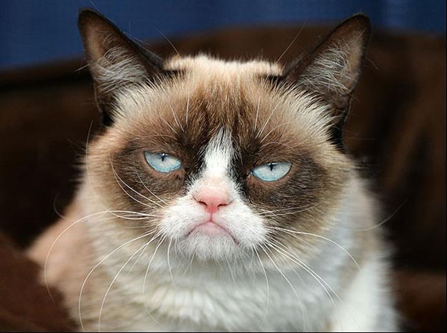 Os-Gatos-Mais-Famosos-da-Internet-Blog-Animal-24