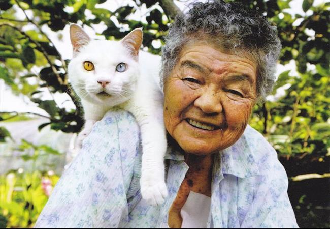Os-Gatos-Mais-Famosos-da-Internet-Blog-Animal-32