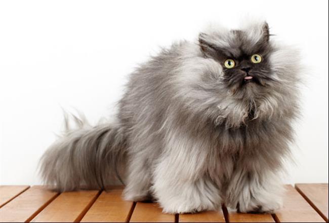 Os-Gatos-Mais-Famosos-da-Internet-Blog-Animal-35