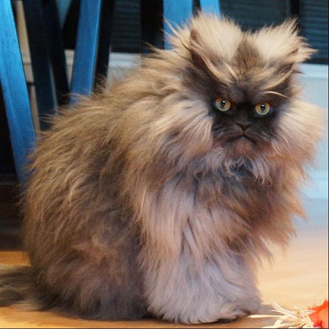 Os-Gatos-Mais-Famosos-da-Internet-Blog-Animal-36