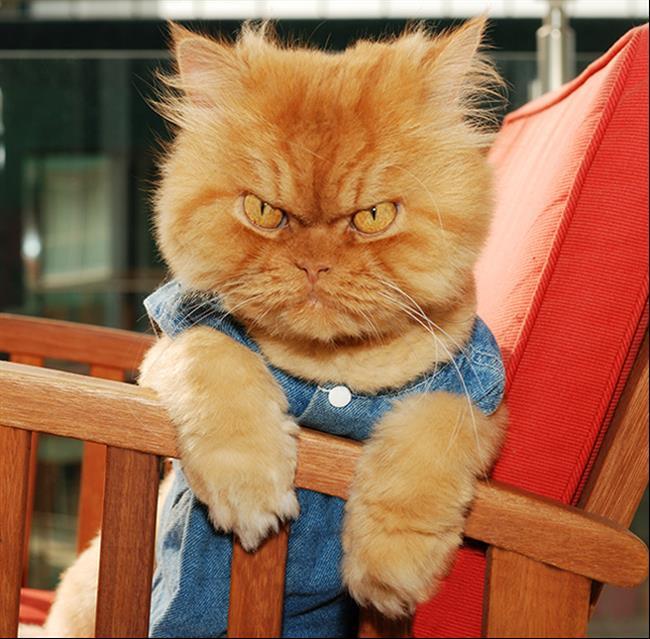 Os-Gatos-Mais-Famosos-da-Internet-Blog-Animal-5