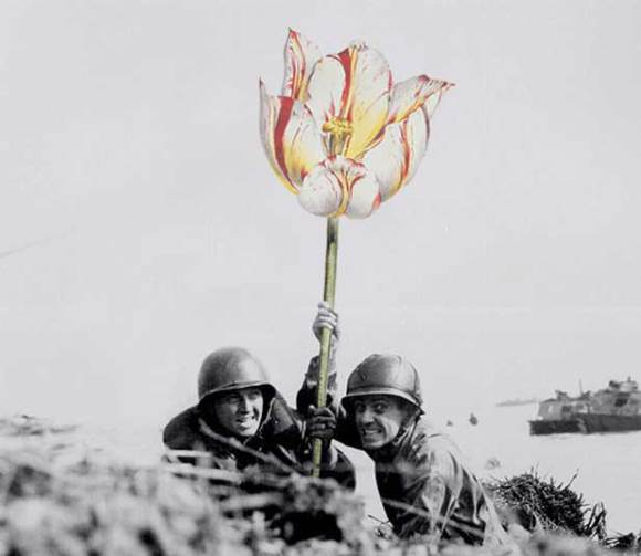 flores-na-guerra-4