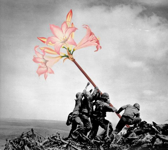 flores-na-guerra-5